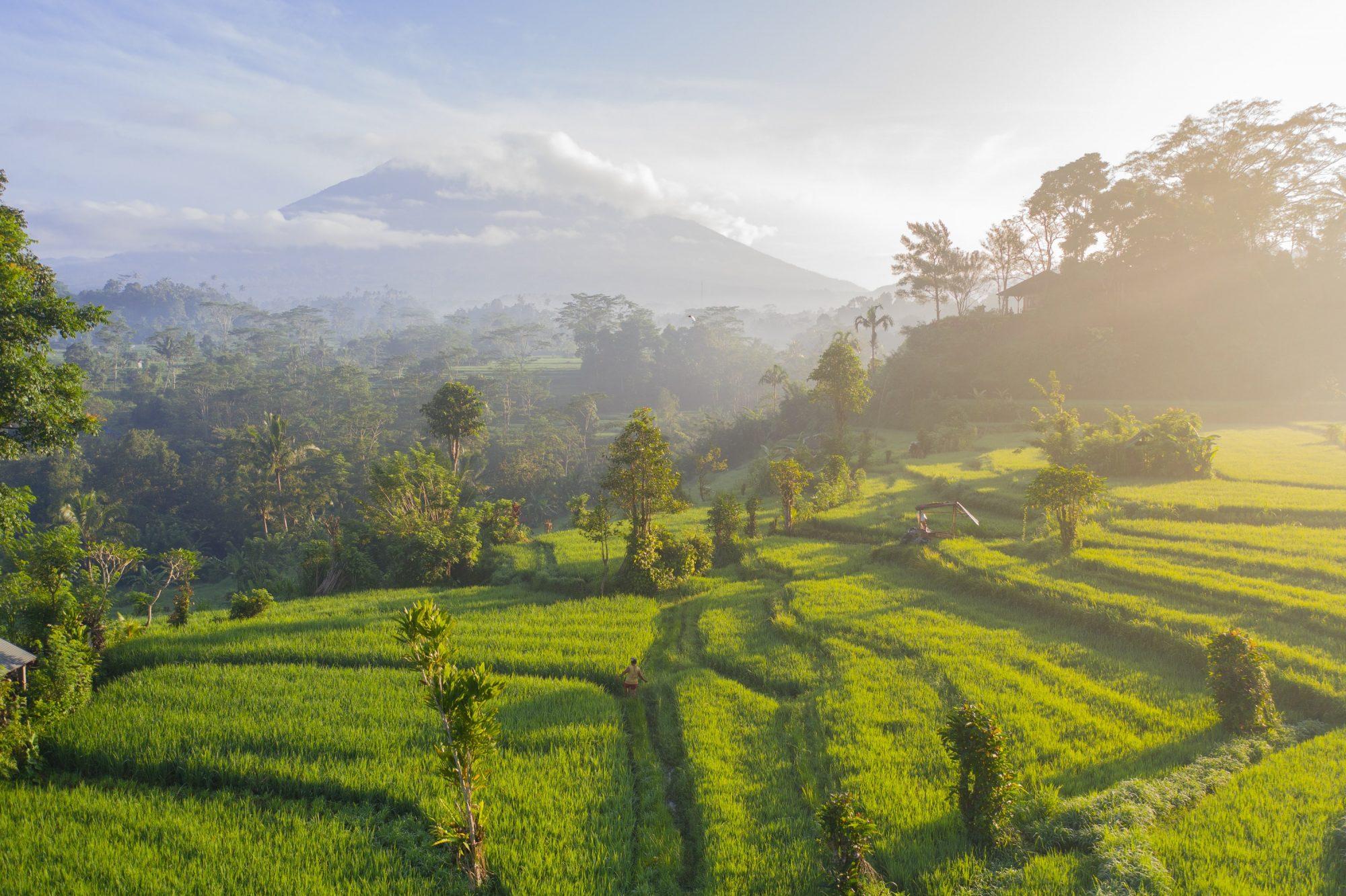 viaje en bali, arrozales